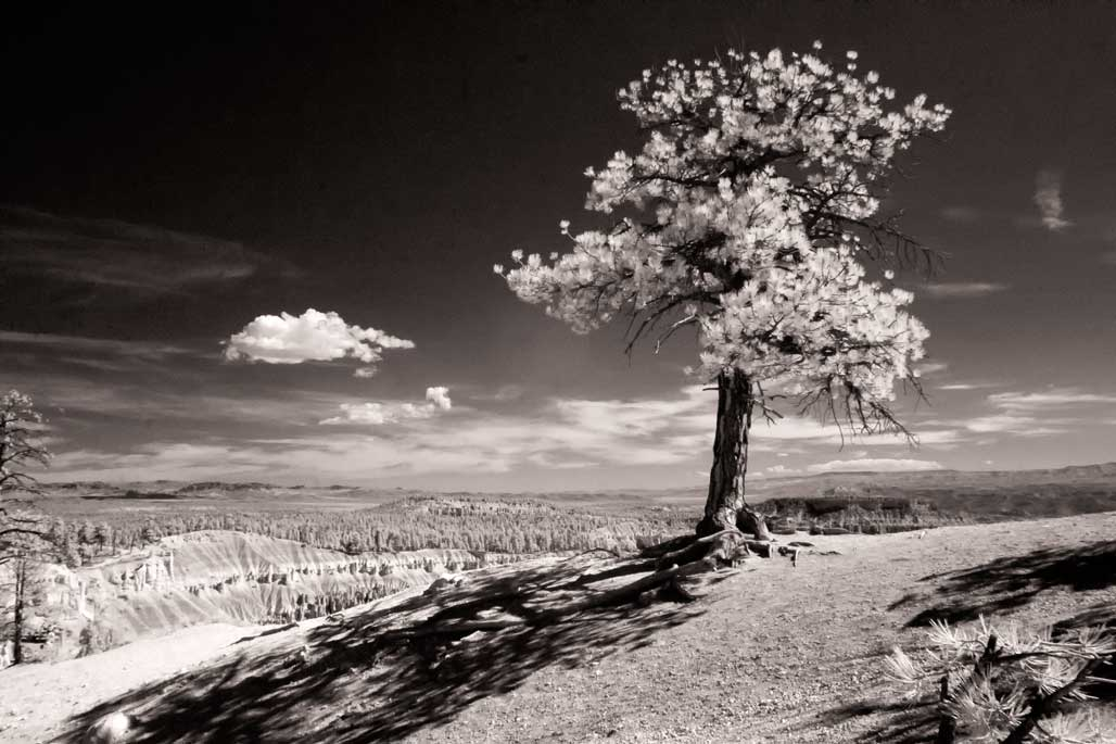 Zion National Park in Infrared